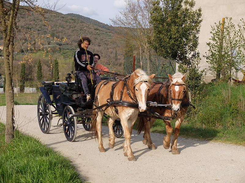 Kutschfahrten mit dem netten Hofbesitzer auf unserem Agriturismo Fiorentino