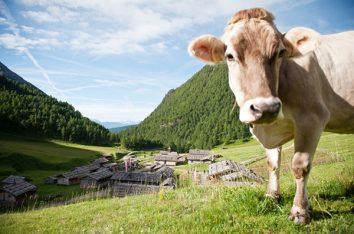 Herrliche Almen in Südtirol
