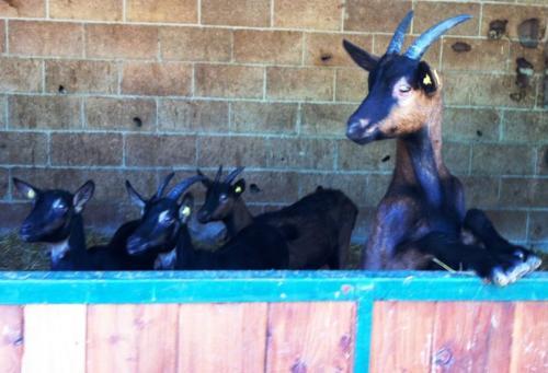 Auch liebe Tiere lieben auf unserem Bauernhof am Gardasee