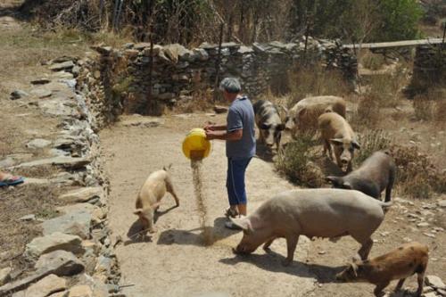 Auf unserem Bauernhof Sardinien wird noch aktive Landwirtschaft betrieben