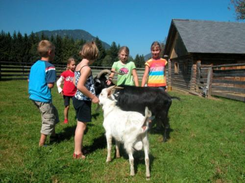 erlebnis-bauernhof-steiermark-5