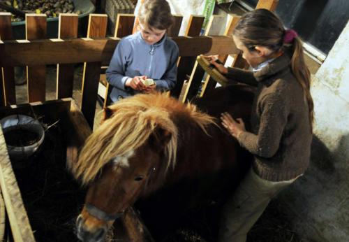 Pony streicheln und pflegen