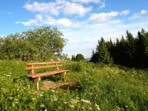 familiengasthof-schwarzwald-8